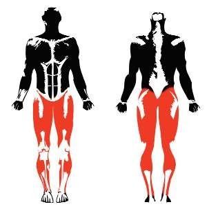 Máquinas biosaludables fortalecen músculos de las piernas