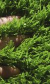 comprar grama artificial en barranquilla para proyectos con grama sintética