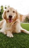 grama artificial para mascotas