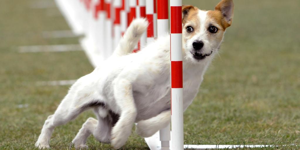 Deportes caninos para realizar con perros de todas las razas